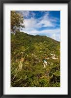Framed Dominica, Roseau, Grand Bay Area, Petite Savanne
