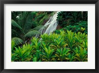 Framed Shaw Park Gardens, Jamaica, Caribbean