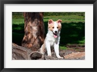 Framed Border Collie puppy dog  by a tree
