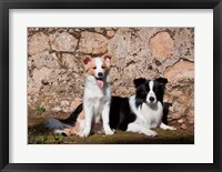 Framed pair of Border Collie dogs