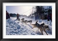 Framed Sled Dog Team Starting Their Run on Mt Chocorua, New Hampshire, USA