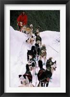 Framed Dog Sled Racing in the 1991 Iditarod Sled Race, Alaska, USA