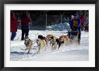 Framed Sled Dog Team, New Hampshire, USA