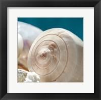 Framed Shell Quartet