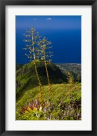Framed Martinique, West Indies, Agave on Ridge, Mt Pelee