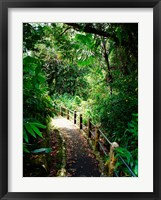 Framed Puerto Rico, Luquillo, El Yunque National Forest path