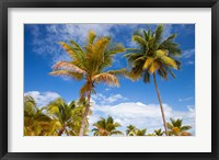Framed Palm trees under blue skies, San Juan, Puerto Rico