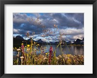 Framed Wildflowers, Jasper National Park, Alberta, Canada