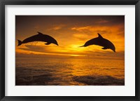 Framed Silhoutte of Bottlenose Dolphins, Caribbean