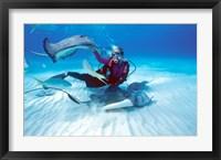 Framed Stingray City, Cayman Islands, Caribbean