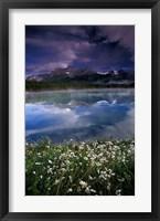 Framed Alberta, Banff National Park Lake Maligne wildflowers
