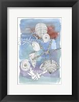 Framed Sea Shell I