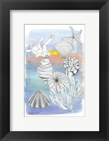Sea Shell II Framed Print