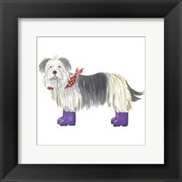 Framed Shaggy Dog II