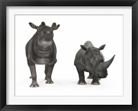 Framed adult Brontotherium compared to a modern adult White Rhinoceros