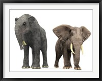 Framed adult Deinotherium compared to a modern adult African Elephant