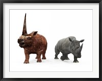 Framed adult Elasmotherium compared to a modern adult White Rhinoceros