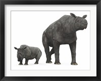 Framed adult Paraceratherium compared to a modern adult White Rhinoceros