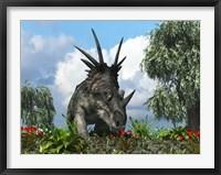 Framed Styracosaurus samples flowers of the order Ericales