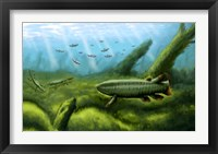 Framed Holoptychius, Tulerpeton and Moythomasia, prehistoric fish of the Devonian period