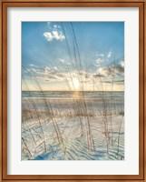Framed Among the Grass