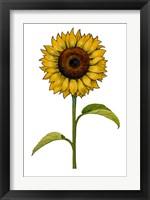 Framed Floral Sunflower