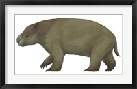 Framed Diprotodon, the Largest know Marsupial