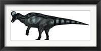 Framed Corythosaurus, a Large Hadrosaurid Dinosaur