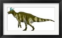 Framed Lambeosaurus Lambei, a Hadrosaurid Dinosaur from the Cretaceous Period