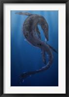 Framed Tylosaurus, a Giant Marine Squamata Shedding its Skin