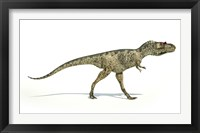 Framed Albertosaurus Dinosaur on White Background