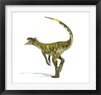 Framed Herrerasaurus dinosaur on white background