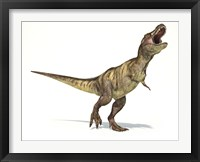 Framed Tyrannosaurus Rex Dinosaur on White Background