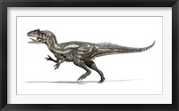 Framed Allosaurus Dinosaur on White Background