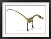 Framed Coelophysis Dinosaur