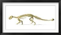 Framed 3D Rendering of an Ankylosaurus Dinosaur Skeleton