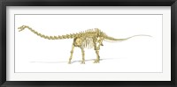 Framed 3D Rendering of a Diplodocus Dinosaur Skeleton