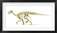 Framed 3D Rendering of an Lguanodon Dinosaur Skeleton