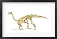 Framed 3D Rendering of a Plateosaurus dinosaur skeleton