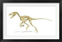 Framed 3D Rendering of a Velociraptor Dinosaur Skeleton