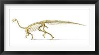 3D Rendering of a Plateosaurus Framed Print