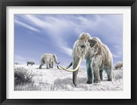 Framed Two Woolly Mammoths in a Snow Covered Field with a Few Bison