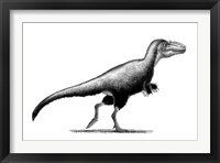 Black Ink Drawing of Teratophoneus Curriei Framed Print