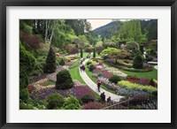 Framed Tulips, Butchart Gardens, Victoria, British Columbia, Canada