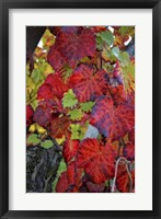 Framed Velvet Leaves