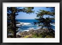 Framed Wild Pacific Trail, Vancouver Island British Columbia