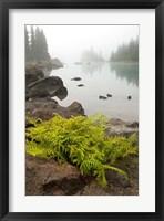 Framed Alpine lady fern, Garibaldi Lake, British Columbia