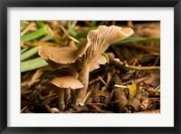Framed Mushroom, Fungi, Stanley Park, British Columbia