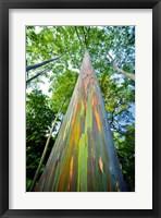 Framed Painted Eucalyptus