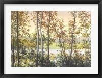 Autumn Shady Framed Print